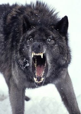 Revenge of the Ghost Wolf has been exposing corruption in Central West Virginia for three years and has been under direct attack by the most corrupt public official in Central West Virginia Gerald B Hough the entire time. Hough has attempted to publish false information that is not backed up by any court documents, in fact actually contains information that is not in any court documents because Hough published the exact opposite of the truth, and now may be in some trouble for it, especially since documents are being prepared to bring civil actions against him for filing false court documents while trying to keep the Gilmer Free Press under a gag order and Hough just lost one court action and now is being sued for court costs and attorney fees! Gerry Hough may not have long now before he is completely ruined professionally and he is so dishonest that she SHOULD NOT be teaching at any level, but especially college considering is has a FERPA CONVICTION! Hough should not be allowed to be a prosecutor either with that conviction that also cost him a position at Glenville State College while also being denied a raise all other staff got as punishment for getting caught lying to the college. Hough is a documented liar and had to sign papers saying he admitted the lies he told the ODC when they investigated him for wrongdoing.