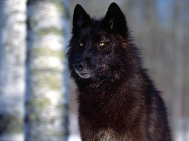 """Those Ghost Wolf downs upon the evil in Crooked County and thinks out loud  """"...Those of you lucky enough to still have your lives, take them with you! But leave the limbs you have lost. They belong to me now!"""""""